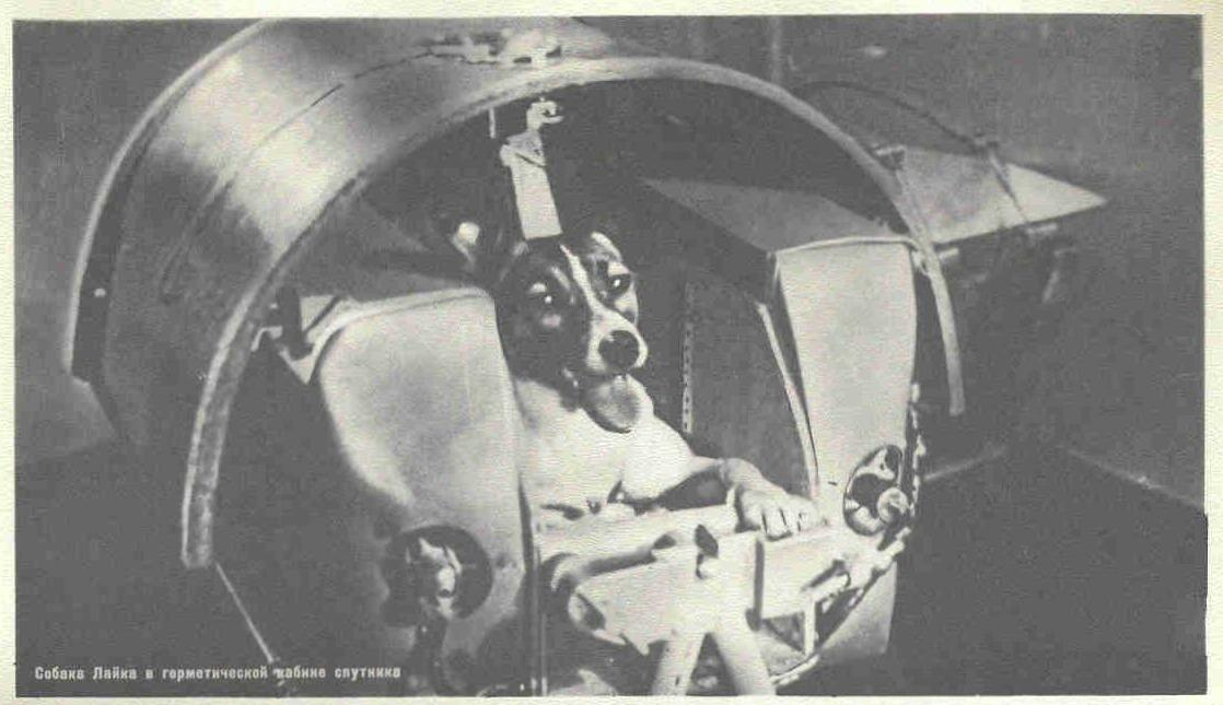 the cold war sputnik and soviet space dog laika for blast off and a dog passenger was ready to rocket into